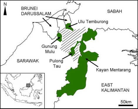 borneo map Borneo Leopard Project