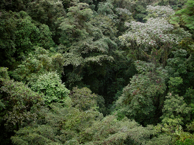 Jungle Costa Rica Trees Terrestrial Carbon Accounting